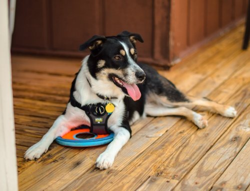 Service Dog ID Cards: What You Should Know